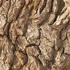 4 Fotos 1 Palabra Naranja Y Hojas Verdes Tronco De árbol Los